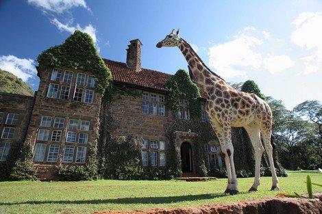 Žirafy jsou krásná zvířata - Keňa, Nairobi
