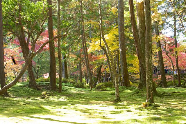 Kdo by nechtěl mít takovouto japonskou zahradu doma?