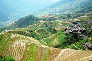 Rýžová pole - panorama