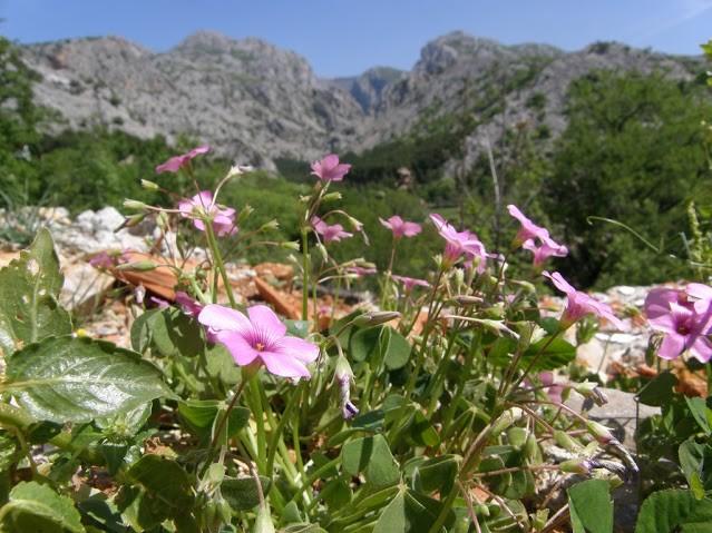 Kaňon v národním parku Peklenica