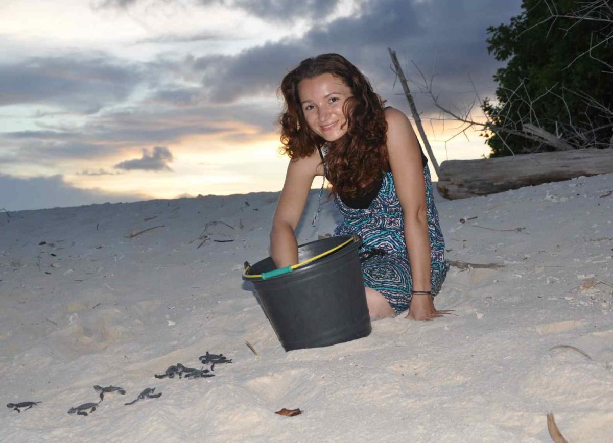 Vypouštění malých želviček do moře