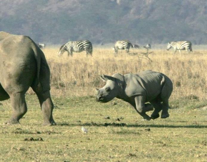 To co uvidíte na safari v Tanzánii nikdy nezapomente
