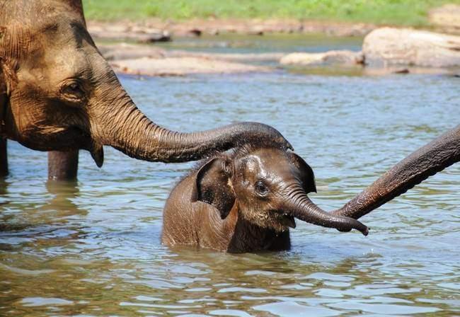 Sloníci na Srí Lance
