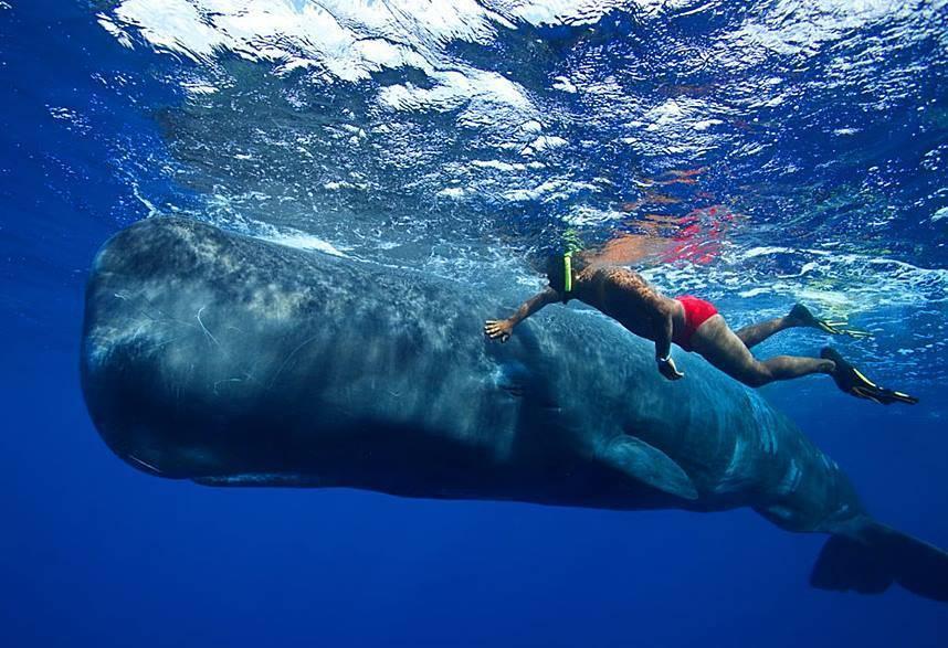 Potápění s velrybami na Azorských ostrovech