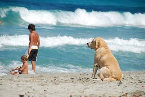 Dovolená v Chorvatsku se psem