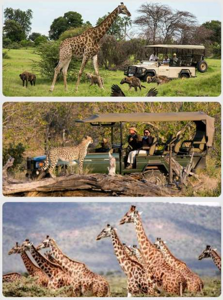 Botswana safari Dovolená