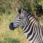 Safari Keňa dovolená