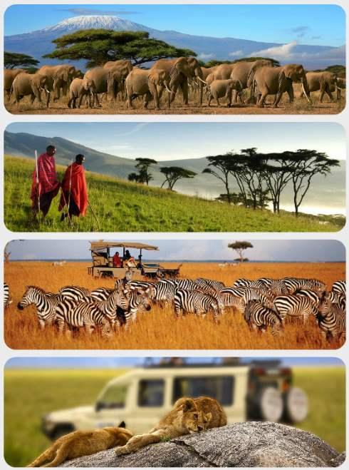 Safari Tanzánie