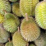 Durian, cena a kde ho koupit