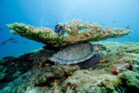 Nejlevnější dovolená Maledivy