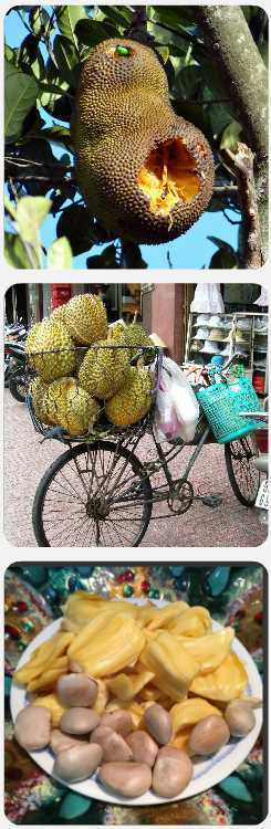 ovoce durian