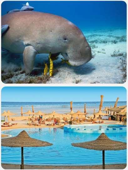 egypt dovolená mořská kráva