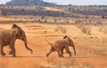 Online keňa